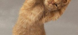 Get-Ready-For-Cat-Streching---How-To-Cat-Strech---A-Good-Way-To-Start-The-Day